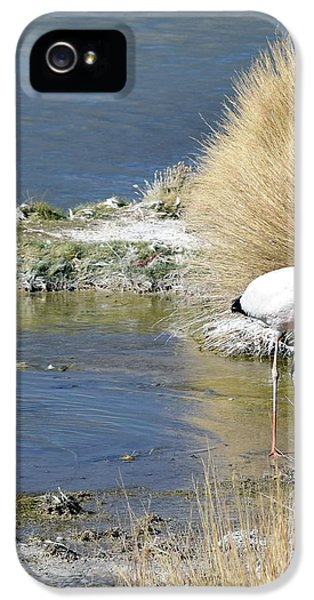 Juvenile Flamingo No. 64 IPhone 5 / 5s Case by Sandy Taylor
