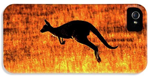 Kangaroo Sunset IPhone 5 / 5s Case by Bruce J Robinson