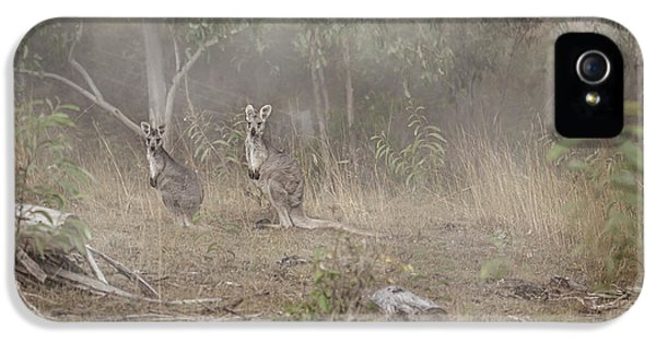 Kangaroos In The Mist IPhone 5 Case by Az Jackson