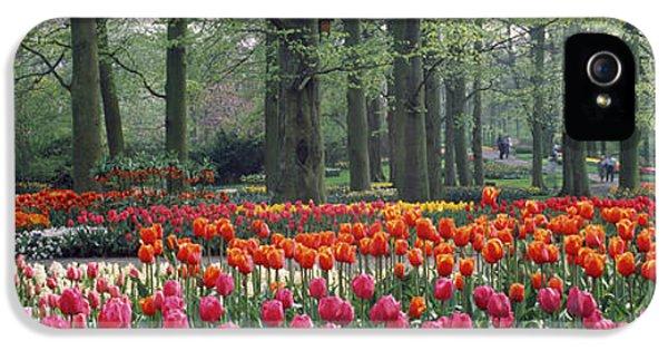 Keukenhof Garden, Lisse, The Netherlands IPhone 5 Case