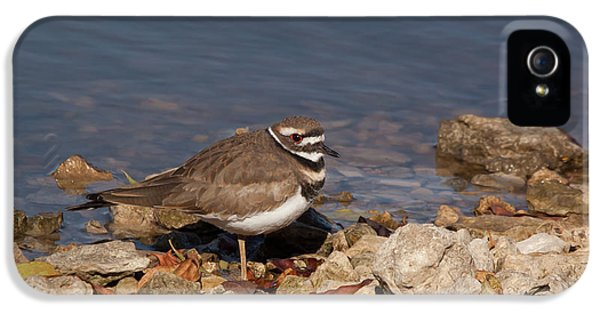 Killdeer iPhone 5 Case - Kildeer On The Rocks by Robert Frederick