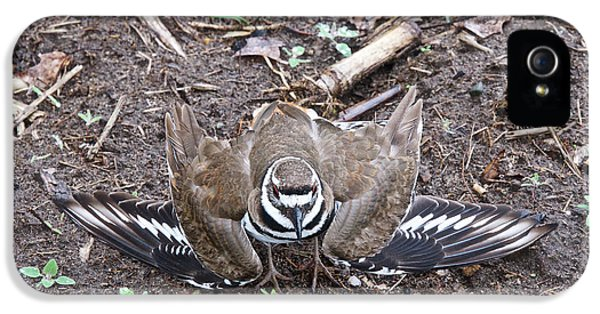 Killdeer iPhone 5 Case - Killdeer 3076 by Michael Peychich
