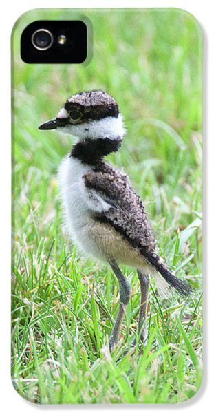 Killdeer iPhone 5 Case - Killdeer Chick 3825 by Michael Peychich