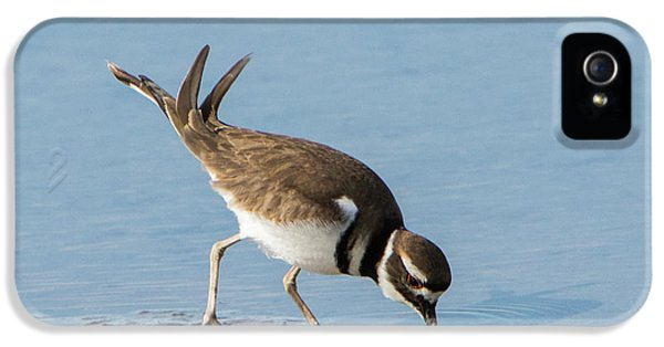 Killdeer iPhone 5 Case - Killdeer by Jurgen Lorenzen
