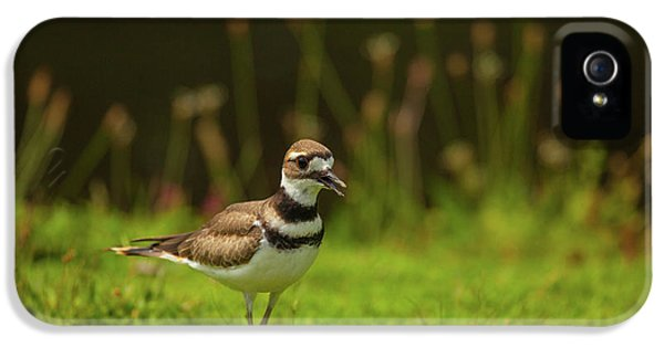 Killdeer IPhone 5 Case by Karol Livote