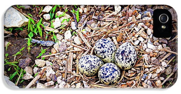 Killdeer Nest IPhone 5 Case by Cricket Hackmann