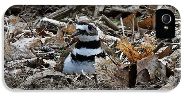 Killdeer iPhone 5 Case - Killdeer On It's Nest 2682 by Michael Peychich