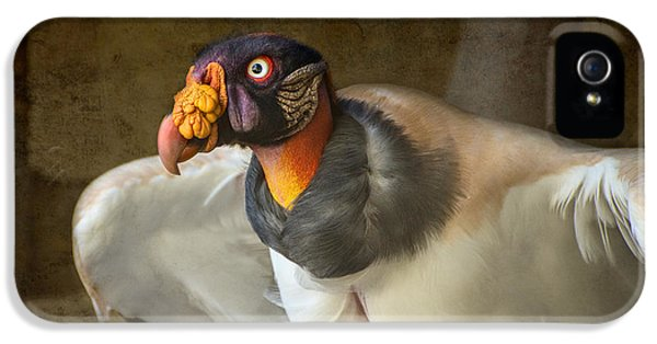 King Vulture IPhone 5 Case by Jamie Pham