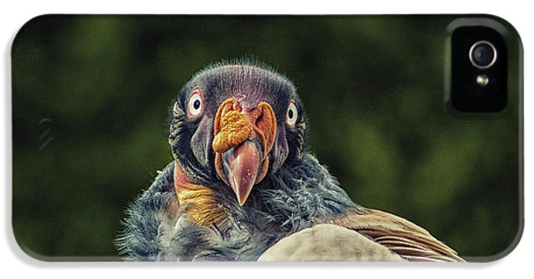 Condor iPhone 5 Case - King Vulture by Martin Newman