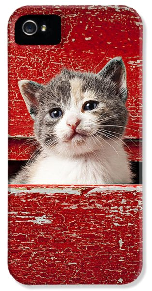 Kitten In Red Drawer IPhone 5 Case by Garry Gay