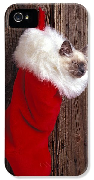 Kitten In Stocking IPhone 5 Case by Garry Gay