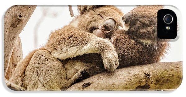 Koala 5 IPhone 5 Case by Werner Padarin