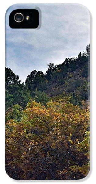 Kolob Canyon Trees No. 1 IPhone 5 Case