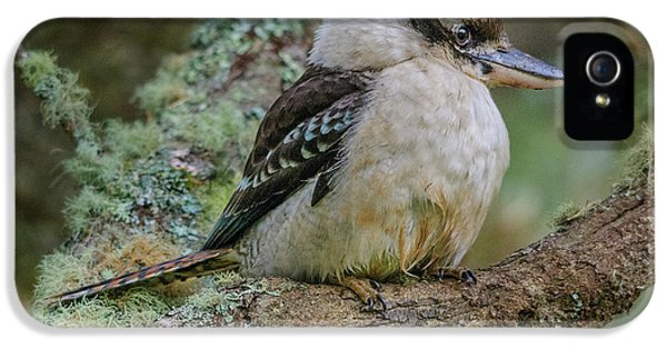 Kookaburra 4 IPhone 5 Case