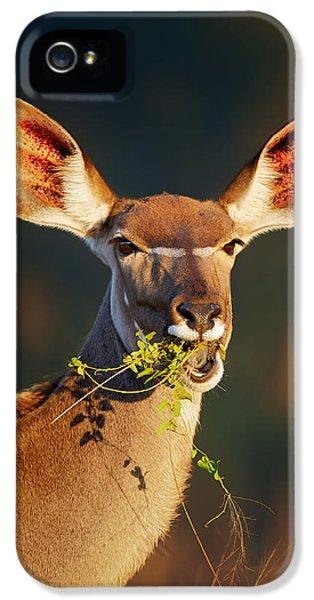 Kudu Portrait Eating Green Leaves IPhone 5 Case by Johan Swanepoel