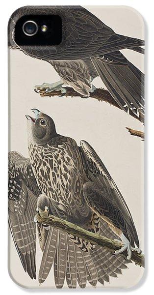 Labrador Falcon IPhone 5 Case