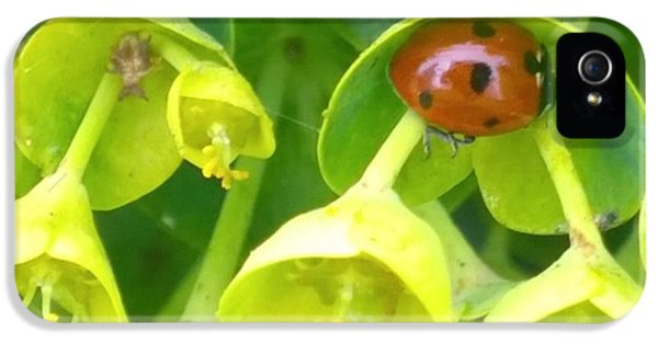 Green iPhone 5 Case - #ladybug Found Some Shelter From The by Shari Warren