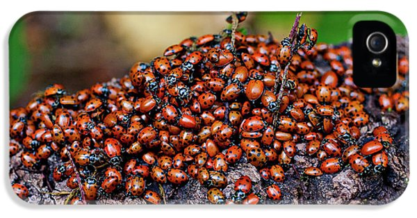 Ladybugs On Branch IPhone 5 Case by Garry Gay