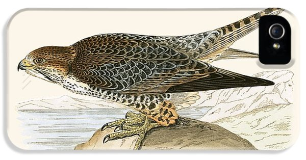 Lanner Falcon IPhone 5 Case by English School