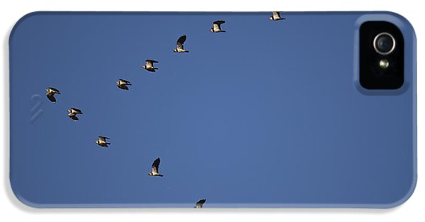 Lapwing Flock IPhone 5 Case by Per-Olov Eriksson