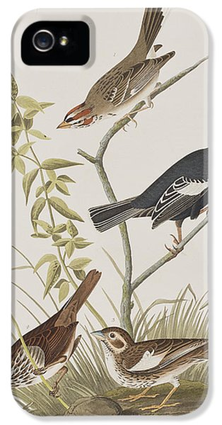 Lark Finch Prairie Finch Brown Song Sparrow IPhone 5 Case by John James Audubon