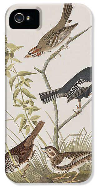 Lark Finch Prairie Finch Brown Song Sparrow IPhone 5 / 5s Case by John James Audubon