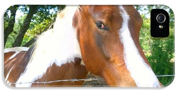 Animal iPhone 5 Case - Last Week, I Met My First #horse! She by Shari Warren