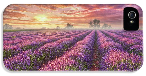 Lavender Field IPhone 5 Case by Phil Jaeger