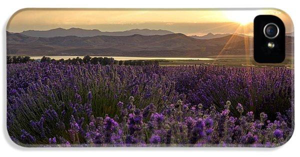 Lavender Glow IPhone 5 Case