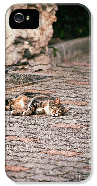 IPhone 5 Case featuring the photograph Lazy Cat    by Silvia Ganora