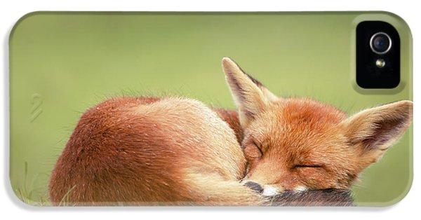 Lazy Fox Series- Lazy Fox Is Lazy IPhone 5 Case