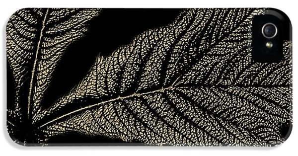 Leaf Detail IPhone 5 Case by Martin Newman