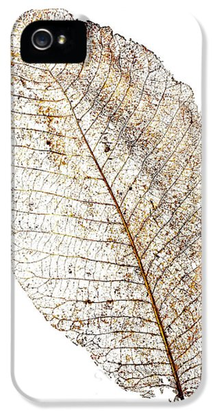 Leaf Skeleton IPhone 5 Case