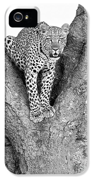 Leopard In A Tree IPhone 5 / 5s Case by Richard Garvey-Williams