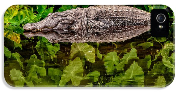Let Sleeping Gators Lie IPhone 5 Case by Christopher Holmes