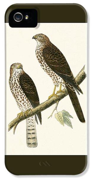 Levant Sparrow Hawk IPhone 5 Case