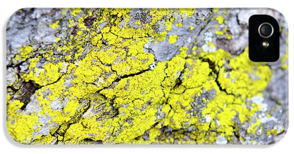 IPhone 5 Case featuring the photograph Lichen Pattern by Christina Rollo