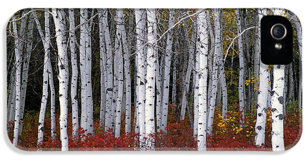 Light In Forest IPhone 5 Case by Leland D Howard