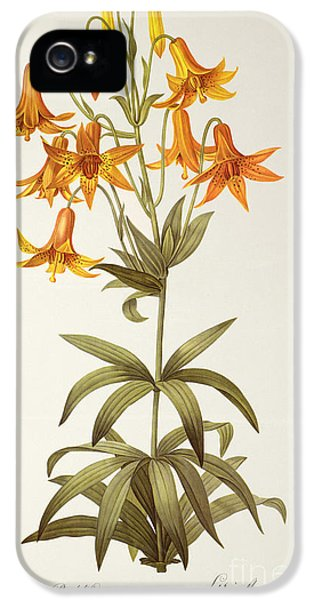 Lilium Penduliflorum IPhone 5 Case by Pierre Joseph Redoute