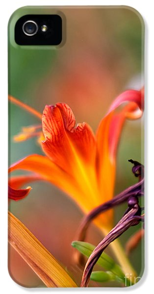 Stamens iPhone 5 Case - Lilly Flowers by Nailia Schwarz