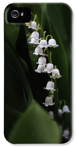 Lily iPhone 5 Case - Lily Of The Valley by Tom Mc Nemar