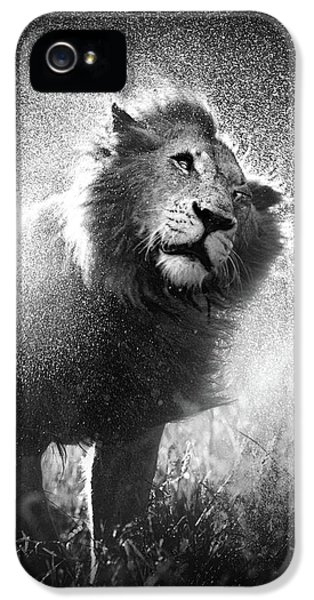 Lion Shaking Off Water IPhone 5 Case by Johan Swanepoel