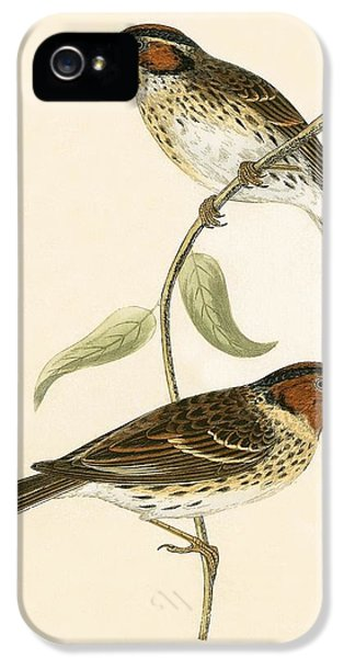 Little Bunting IPhone 5 Case by English School