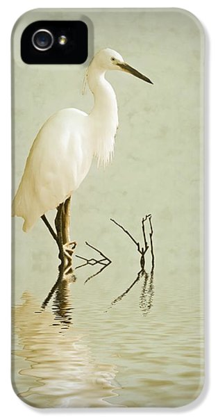 Little Egret IPhone 5 Case by Sharon Lisa Clarke