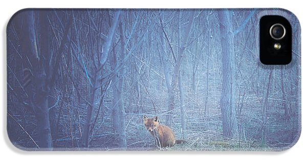 Little Fox In The Woods IPhone 5 Case by Carrie Ann Grippo-Pike