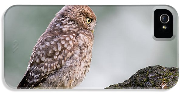 Little Owl Chick Practising Hunting Skills IPhone 5 Case