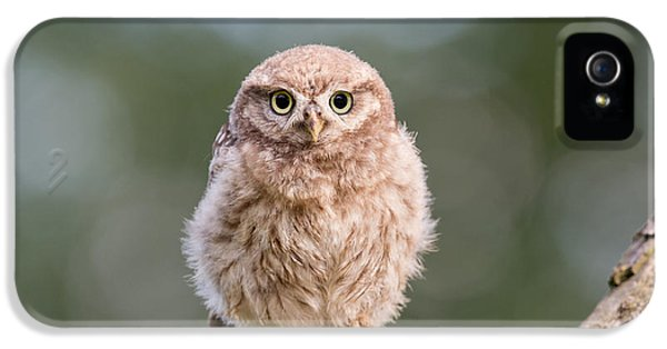Little Owl Chick IPhone 5 Case by Roeselien Raimond