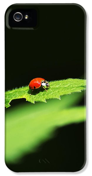 Little Red Ladybug On Green Leaf IPhone 5 Case