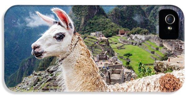 Llama At Machu Picchu IPhone 5 Case