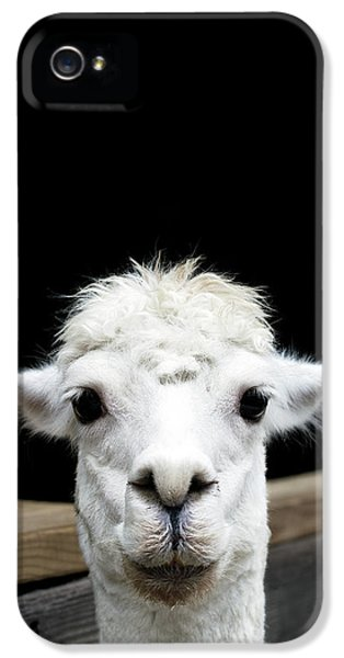 Llama IPhone 5 Case